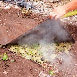 Desenterrando la cochinita pibil